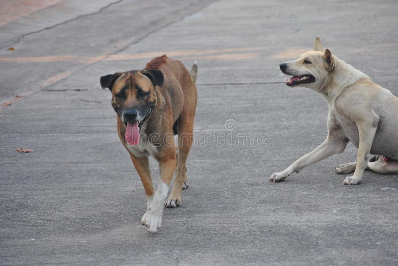 Dogs on road royalty free stock photos