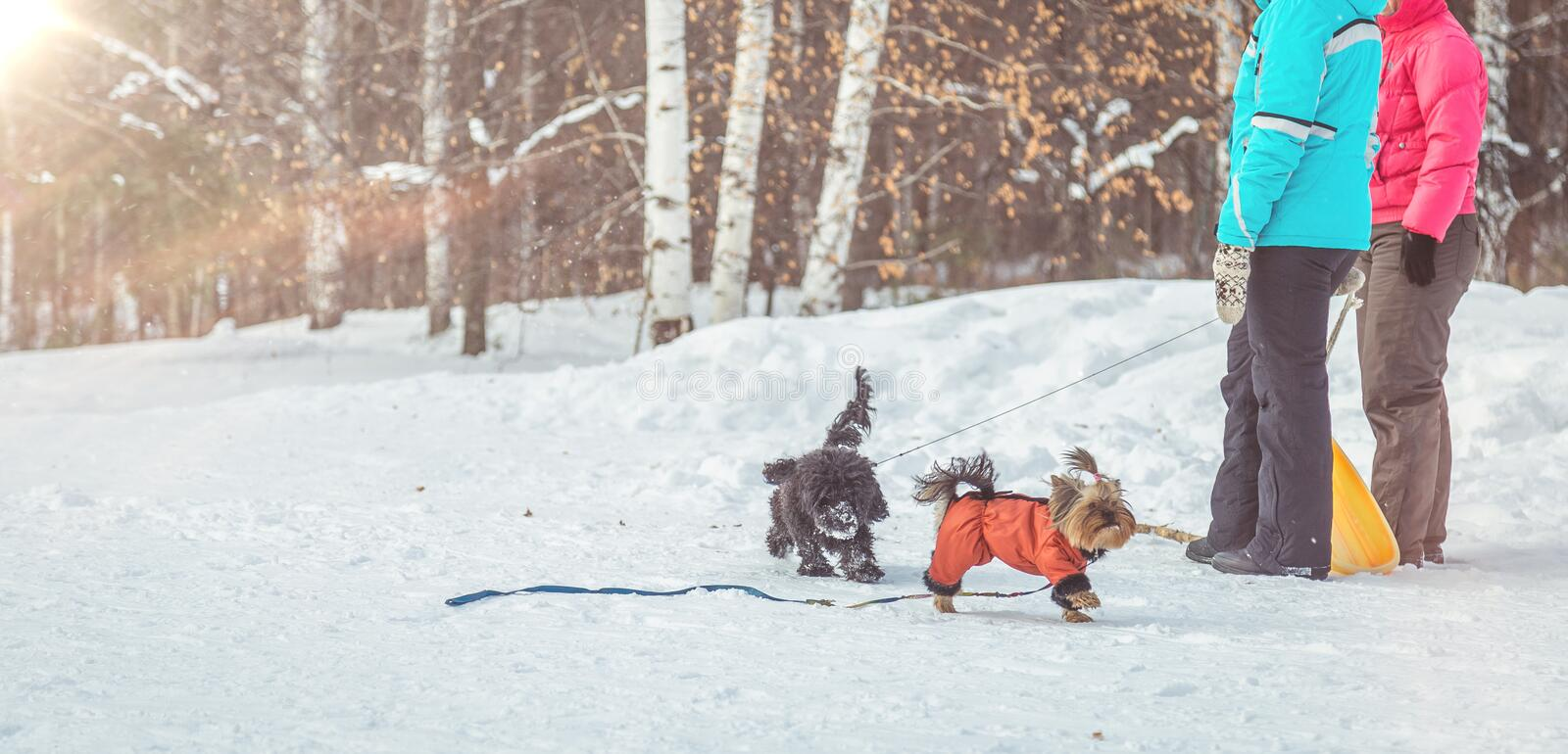 Dogs running around in the winter forest royalty free stock images