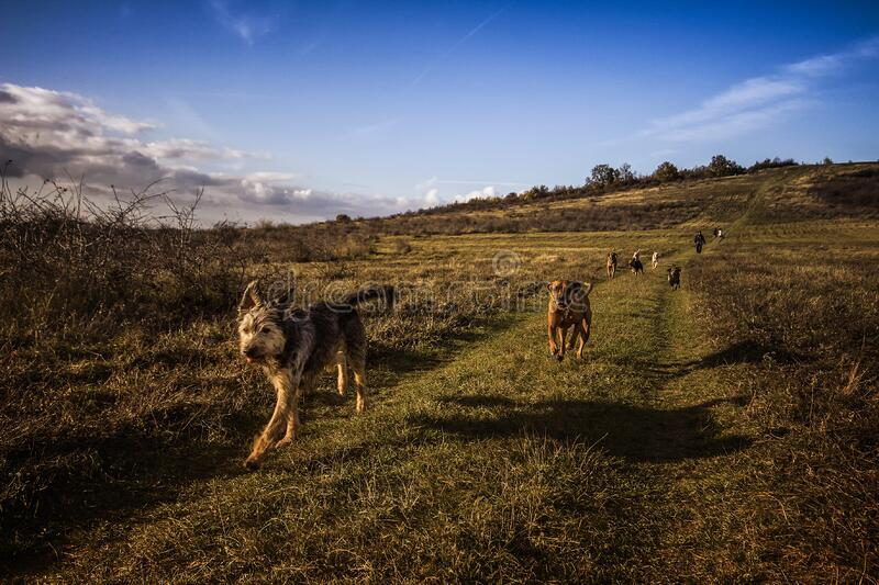 Dogs Running on the Field Under Blue Sky royalty free stock photos