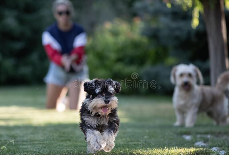 Dogs running in park stock images