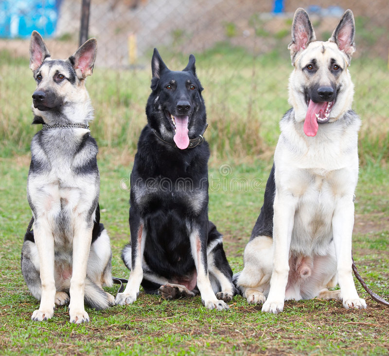 dogs säkerhet arkivfoto