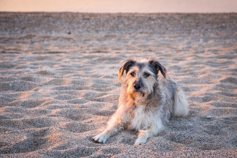 Dogs in sand royalty free stock photo