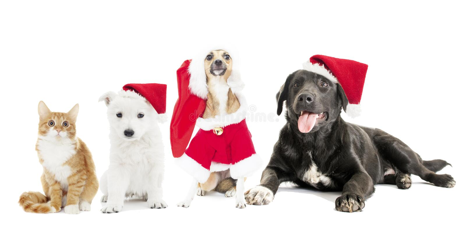 Dogs set in a Christmas hat. On a white background stock image