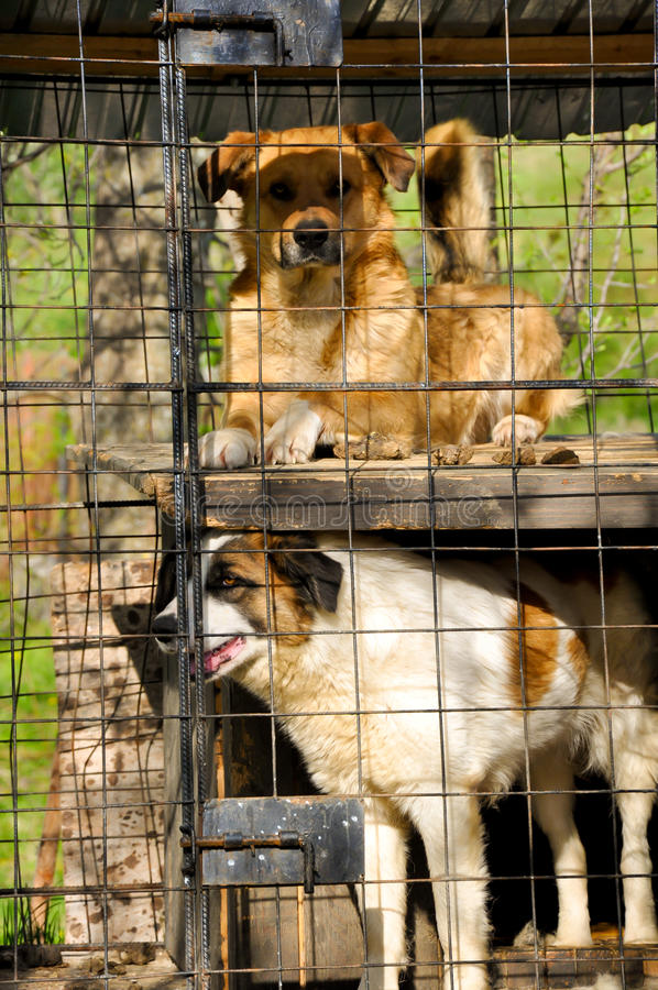 Dogs shelter stock photo