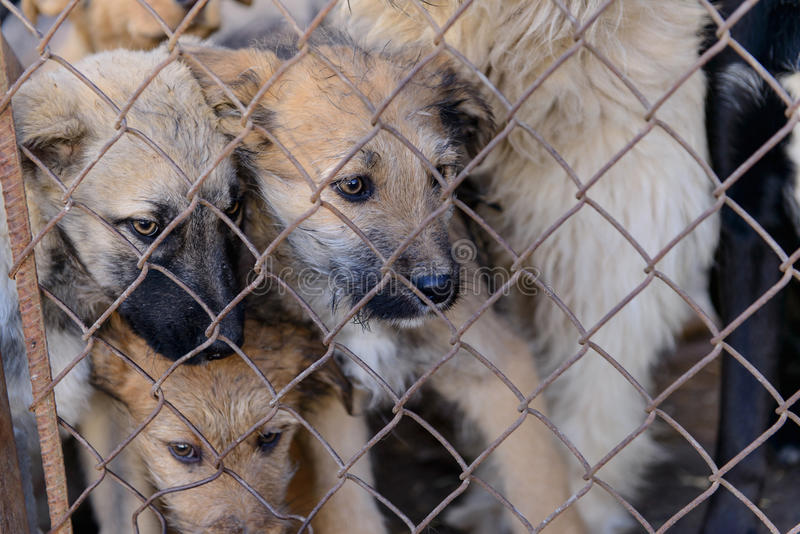 Dogs in shelter. Many stray dogs in shelter locked behind mesh royalty free stock image