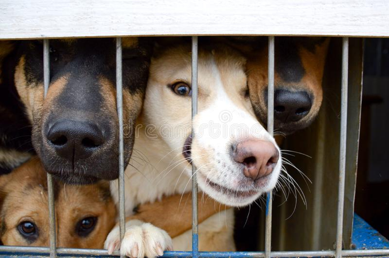 Dogs are sitting behind bars. a shelter for homeless animals stock image