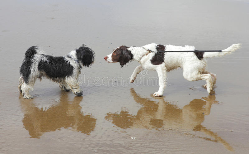Dogs socializing training royalty free stock images
