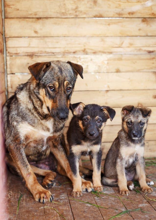 Dogs stock photos