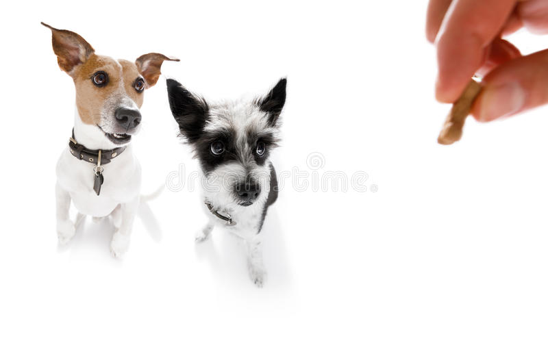 Dogs treat with owner royalty free stock photos