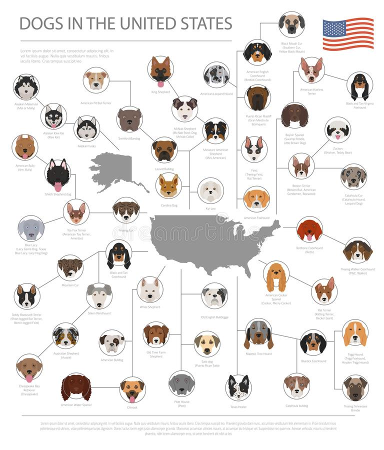 Dogs in the United States. American dog breeds. Infographic temp royalty free illustration
