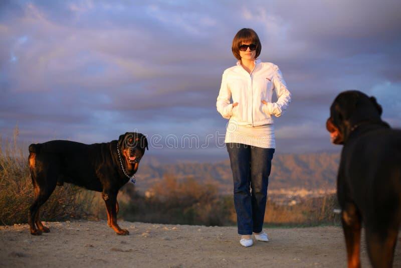 dogs walking woman στοκ φωτογραφία