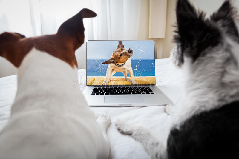 Dogs watching a movie royalty free stock image