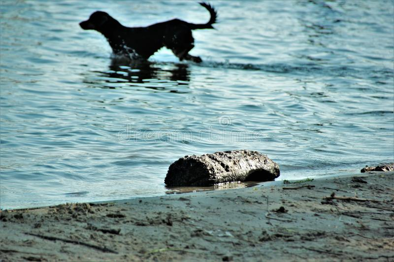 Dogs in the water stock images