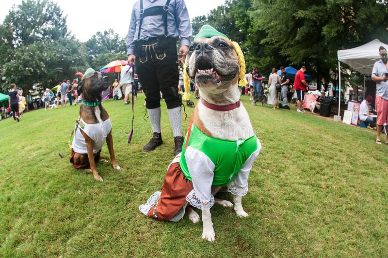 Dogs Wear Funny Bavarian Costumes At Atlanta Doggy Con Event. Atlanta, GA, USA - August 18, 2018: Two dogs wear bavarian costumes as their owner wears lederhosen royalty free stock photos