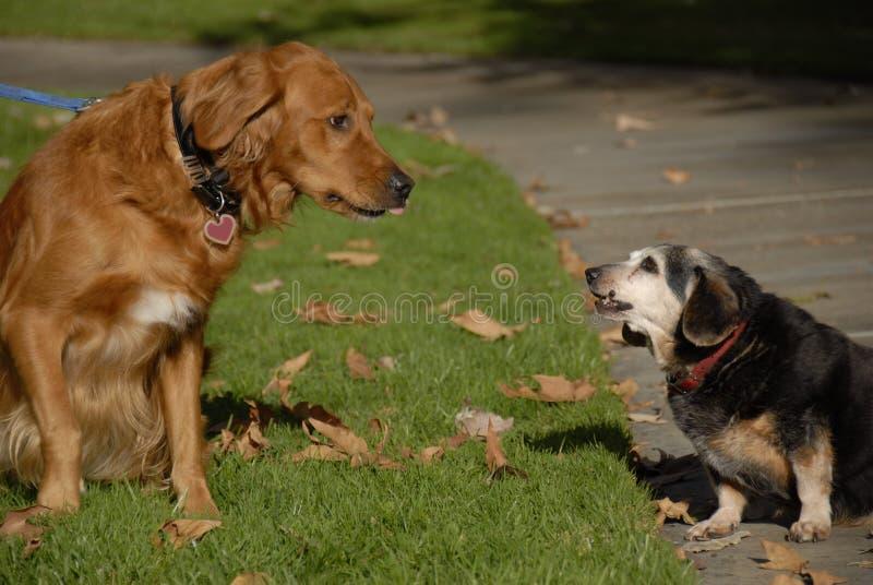 DogsDialog royalty-vrije stock foto's