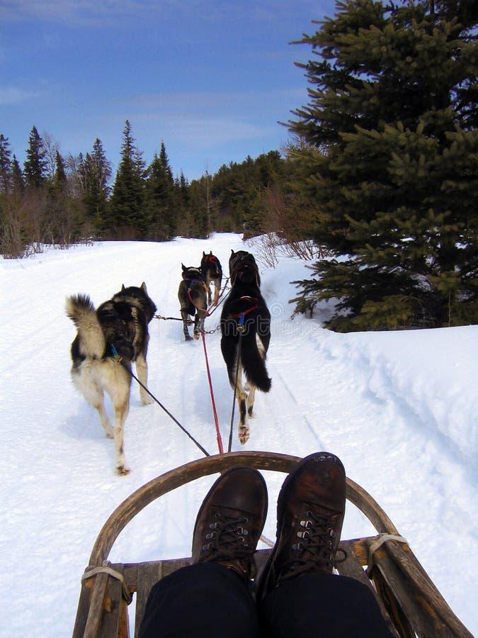 Dogsledding photographie stock libre de droits
