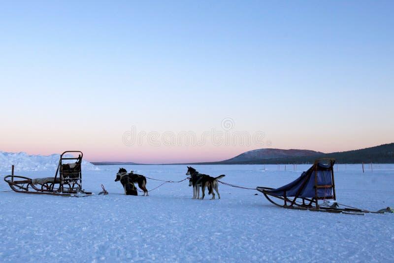 Dogsledding bij Schemer royalty-vrije stock afbeelding