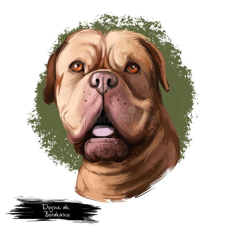 Dogue de Bordeaux, Bordeaux Mastiff, French Mastiff dog digital art illustration isolated on white background. French origin stock illustration