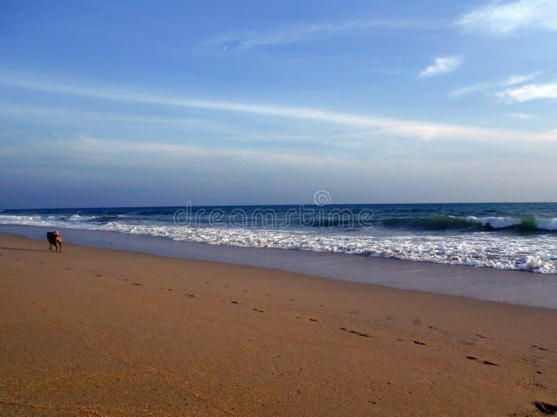 Dogwalk sulla spiaggia fotografia stock libera da diritti