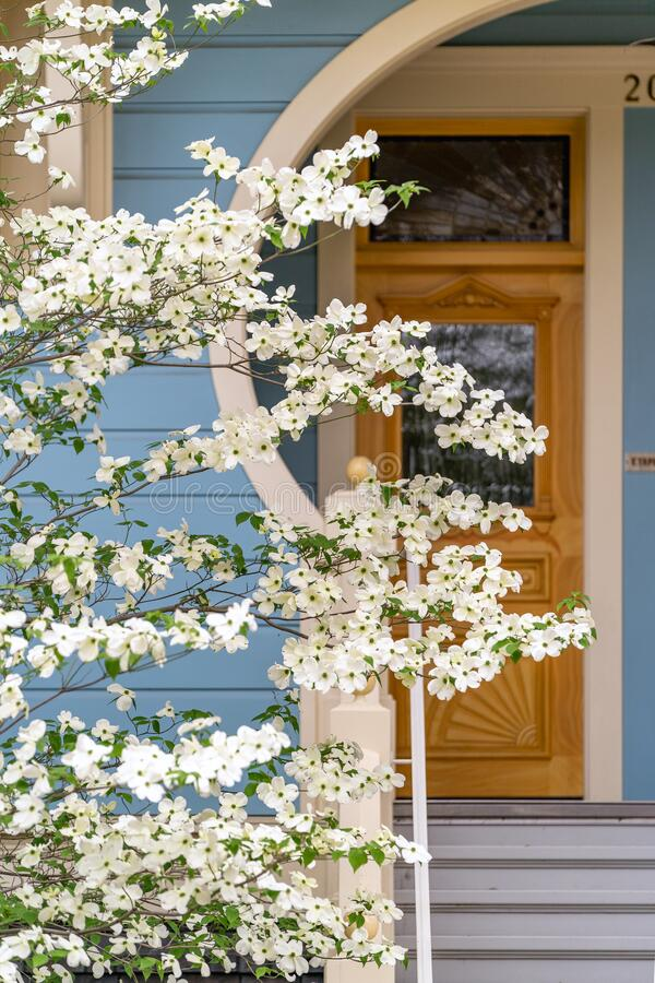 Free Dogwood Blooming In Front Of Victorian House In The Spring Stock Images - 181234574