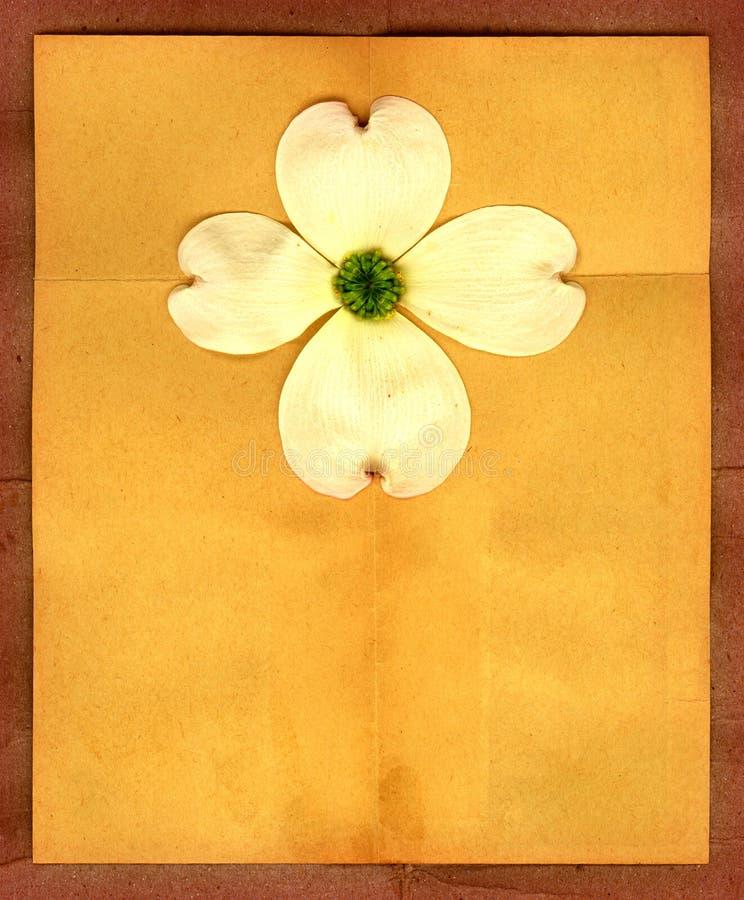 Dogwood Flower. A vintage dogwood flower on a folded paper texture stock illustration