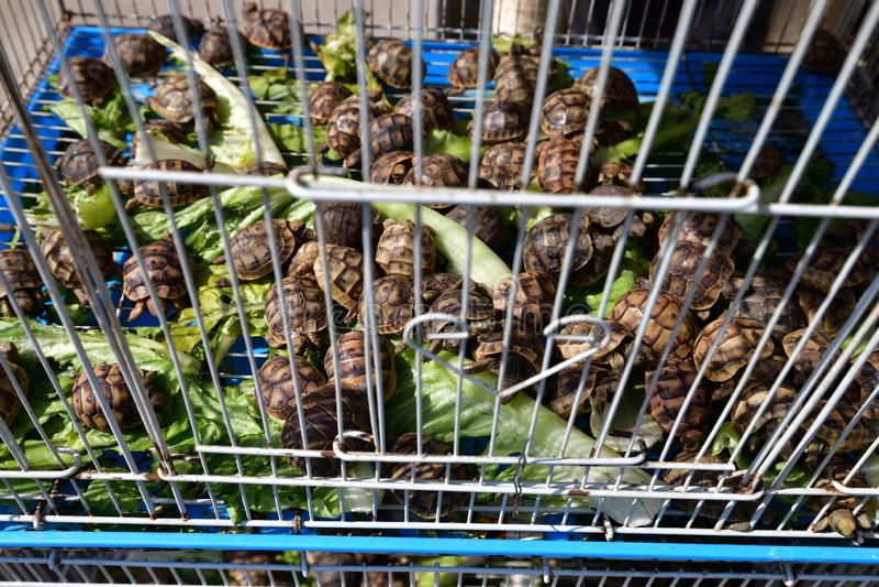 Doha, Catar Venda de tartarugas em Souq Waqif - mercado para a venda de vestuário tradicional fotografia de stock