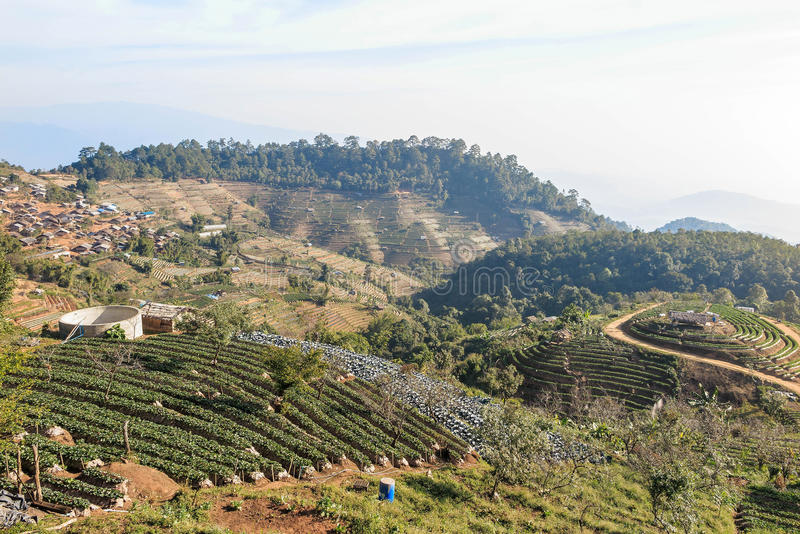 Doi Ang Khang Mountain, village et ferme photographie stock