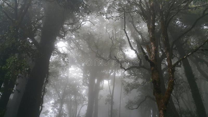 Doi Inthanon Forrest стоковое изображение rf