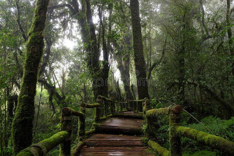 Doi inthanon national park stock photos