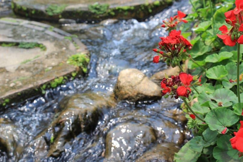Doi Tung Garden Thailand photos libres de droits