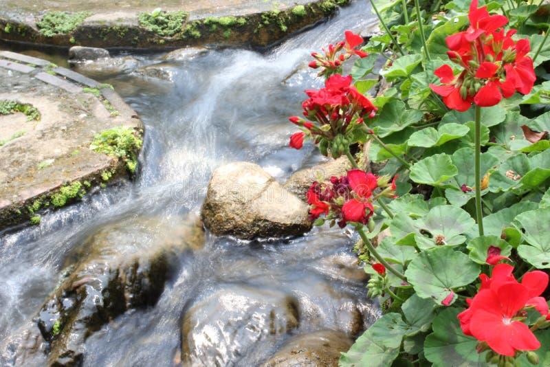 Doi Tung Garden Thailand arkivfoton
