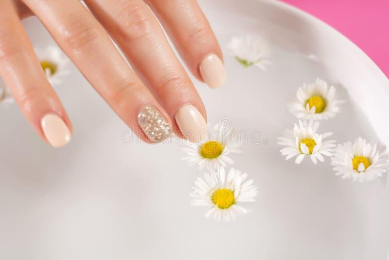 Doigt de jeune femme avec la fleur crème de marguerite de contact de vernis à ongles image libre de droits