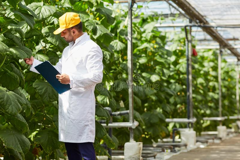 Doing inspection at greenhouse royalty free stock photos