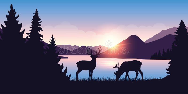 Dois alces pastam pelo rio na floresta no nascer do sol ilustração royalty free