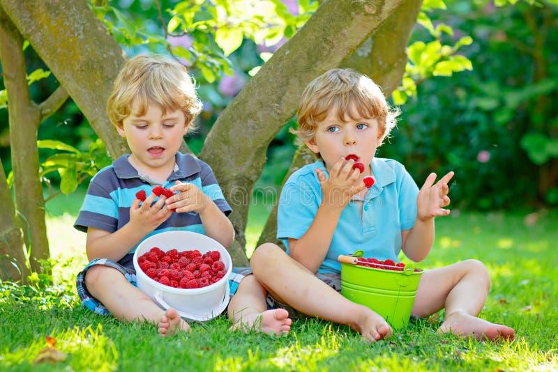 Dois amigos pequenos, meninos da criança que têm o divertimento na exploração agrícola da framboesa no verão fotografia de stock royalty free