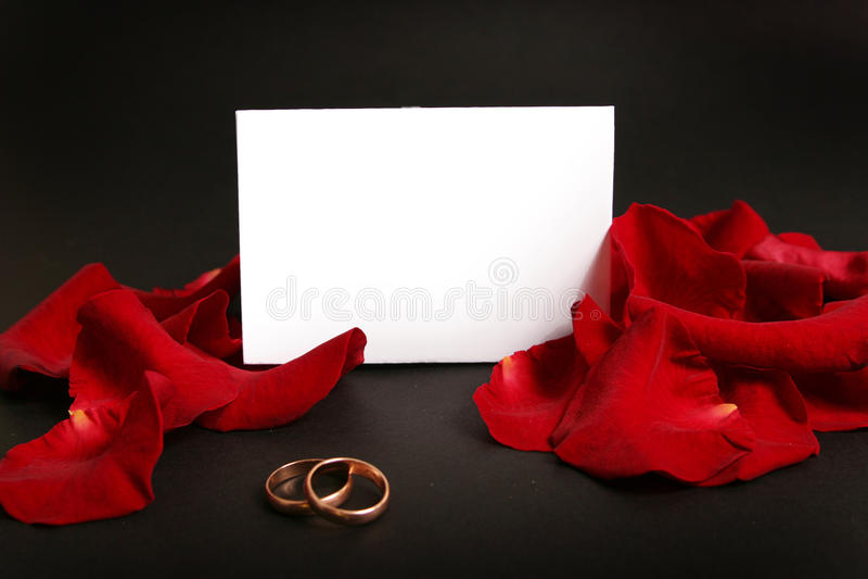 Dois anéis de casamento imagem de stock royalty free