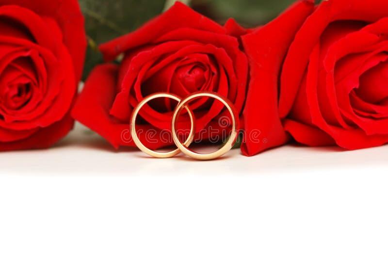 Dois anéis de casamento e rosas vermelhas isolados no branco imagem de stock royalty free