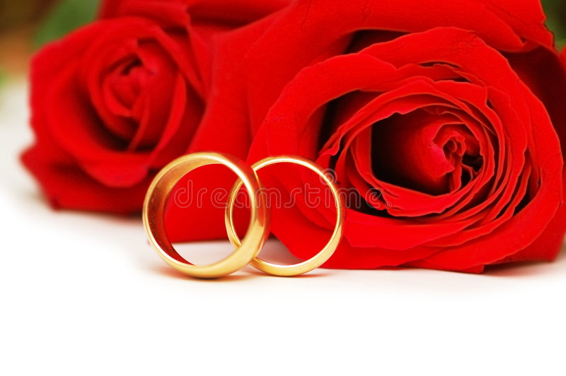 Dois anéis e vermelhos de casamento levantaram-se fotos de stock
