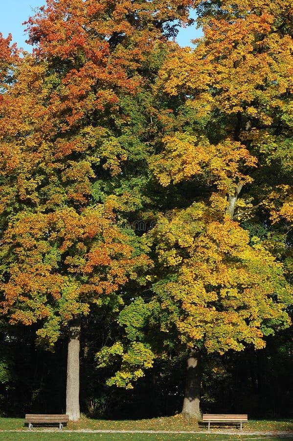 Dois bancos com duas árvores fotografia de stock royalty free