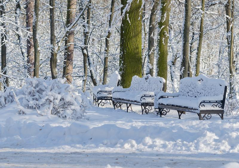 Dois bancos na perspectiva das árvores na neve fotos de stock