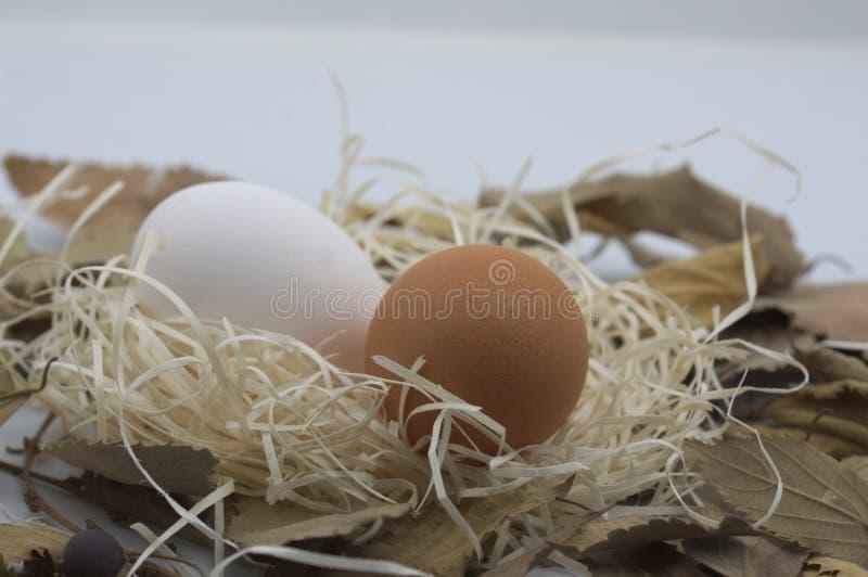 Dois brancos e ovos marrons na palha e nas folhas secadas da árvore foto de stock