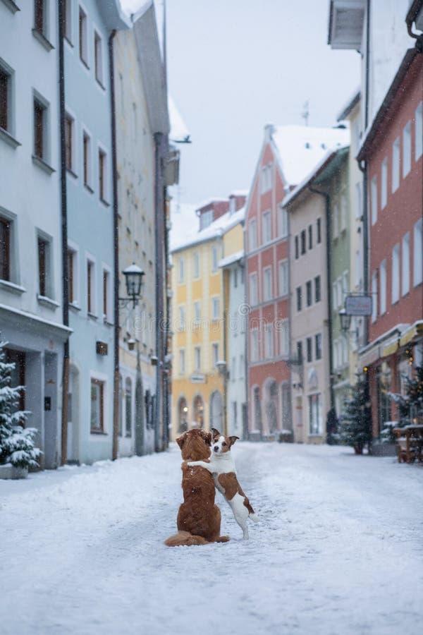 Dois cães abraçam-se e olham-se a rua de uma cidade pequena Animal de estimação na cidade, caminhada, viagem imagem de stock royalty free
