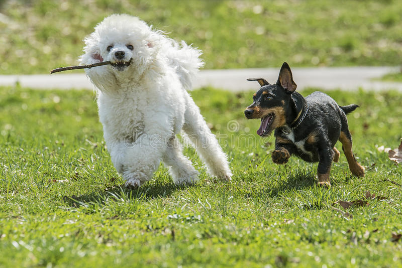 Dois cães bonitos imagem de stock royalty free