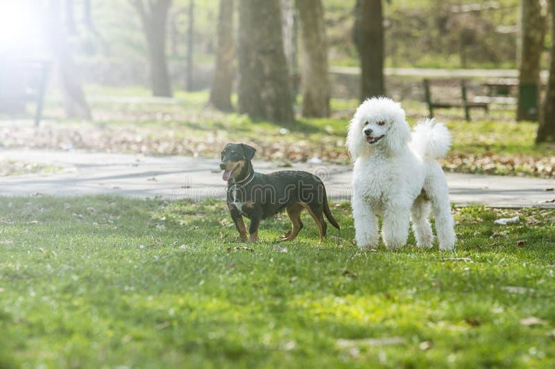 Dois cães bonitos imagens de stock
