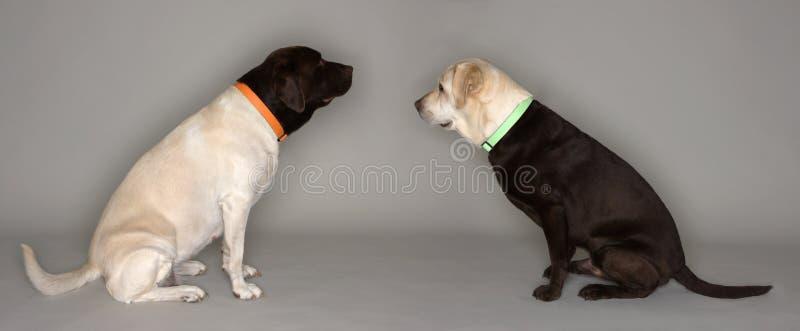 Dois cães, cabeças trocadas imagens de stock royalty free