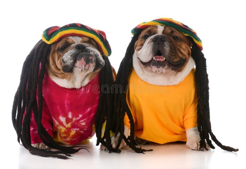 dois cães com dreadlock imagem de stock royalty free