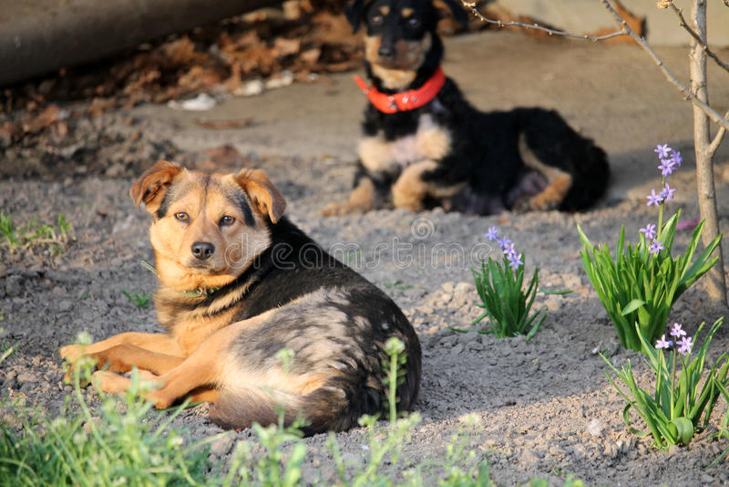 Dois cães da rua imagens de stock