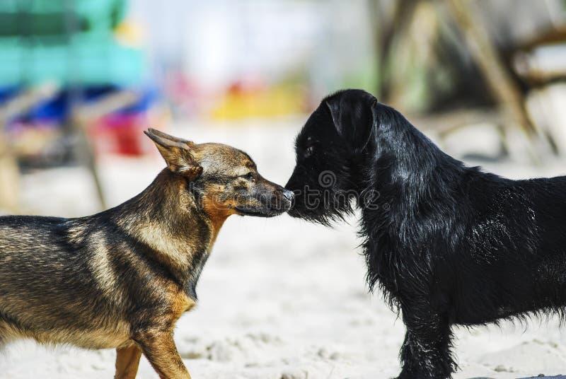 Dois cães das raças diferentes que aspiram como parte do reconnaissa imagens de stock royalty free
