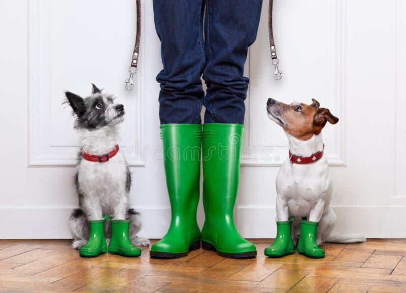 Dois cães e proprietário foto de stock
