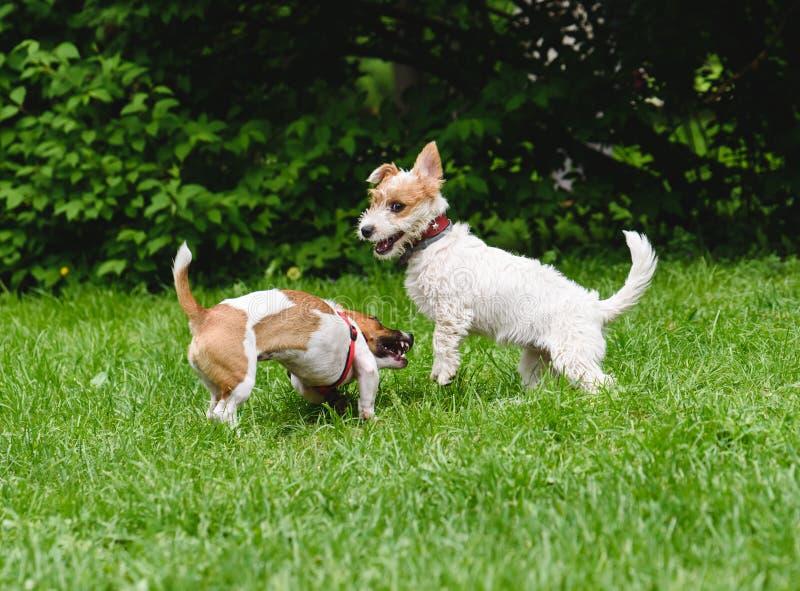 Dois cães engraçados que jogam junto no parque fotografia de stock royalty free